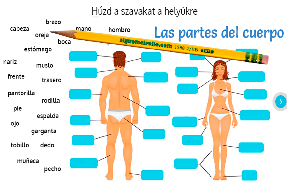Las partes de cuerpo
